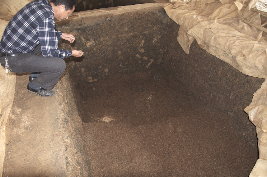 Unsealed baijiu fermentation pit with mash