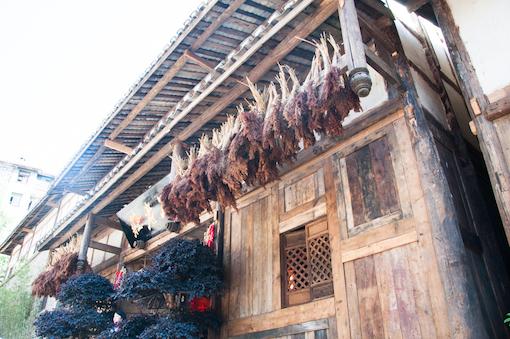 sorghum at baijiu distillery
