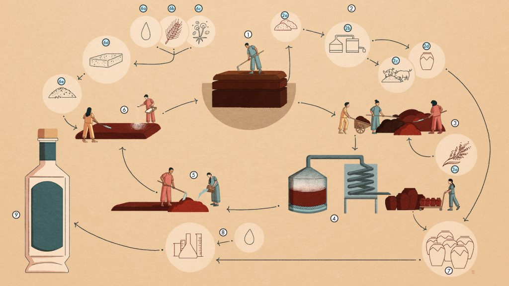 Ming River Strong-aroma Production Cycle